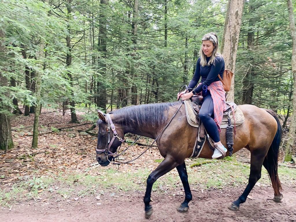 Marlene horse